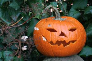 Early Harvest Halloween-Kürbis